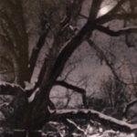 Basking Ridge Great Oak Movie, film, documentary, New Jersey